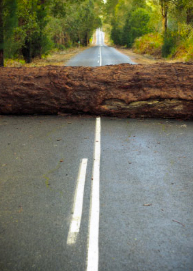 Tree-in-Road